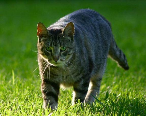 050726_cat_generic_02.jpg