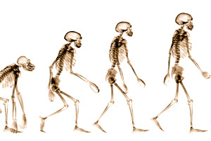 evolution-large-09-02-041.jpg