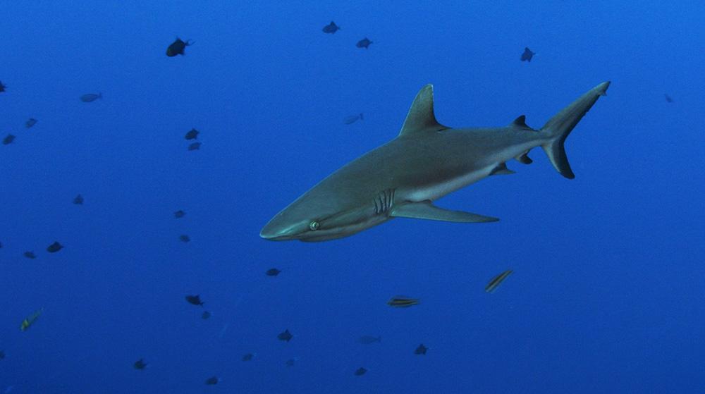 Shark 11.jpg