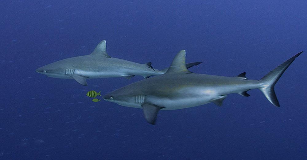Shark 30.jpg