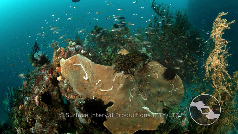 Reef 06.jpg