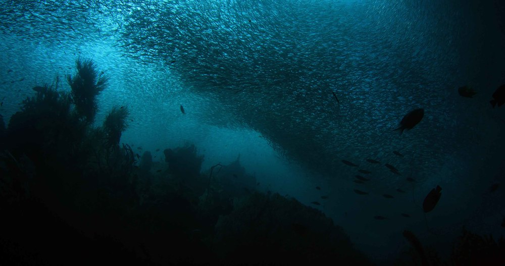 Clouds of fish small.jpg