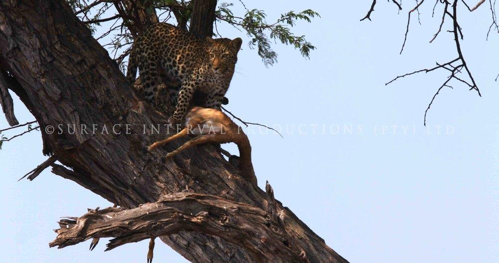 Leopard 07s.jpg
