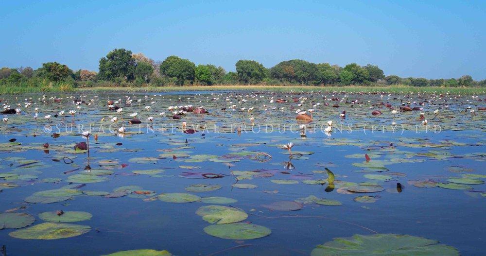 Okavango Delta 008s.jpg