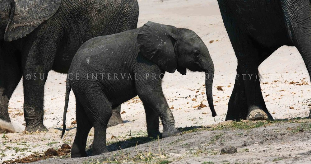 Elephant 003ss.jpg