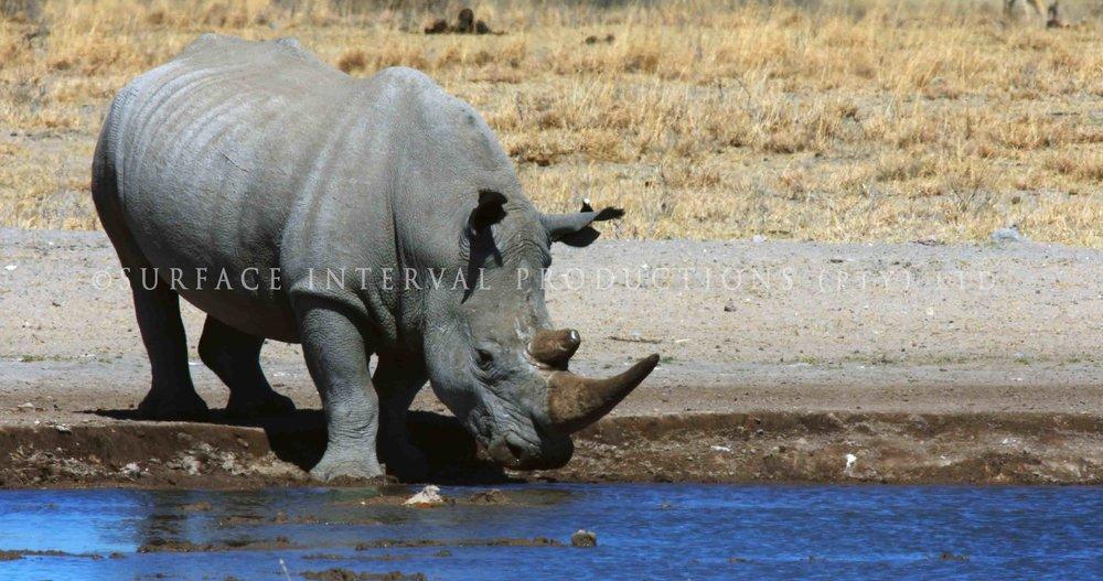 Rhino 001s.jpg