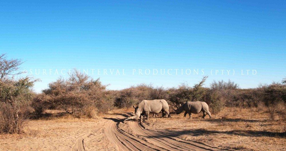 Rhino 003s.jpg