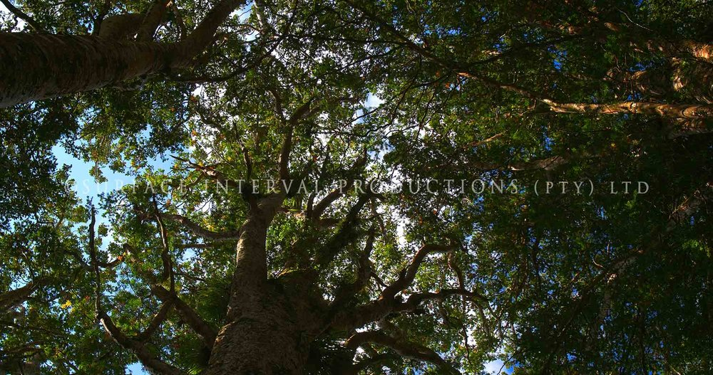 Big Trees 01.jpg