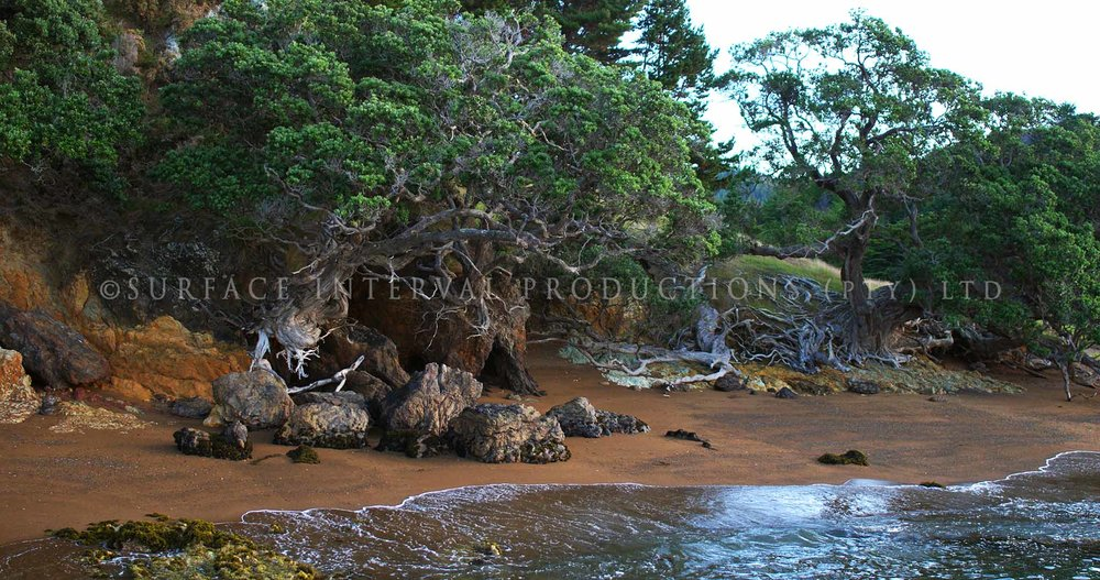 Whangaihe Bay 02.jpg