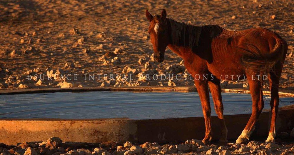 Ause Wild Horses 01.jpg