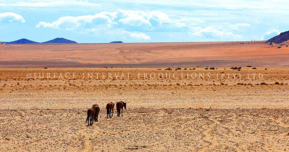 Ause Wild Horses 02.jpg