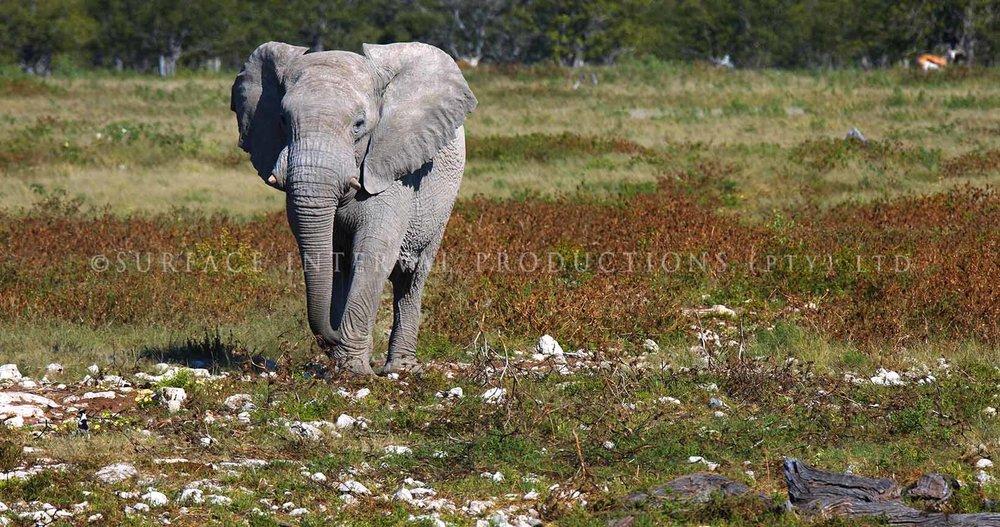 Elephant dead 03.jpg
