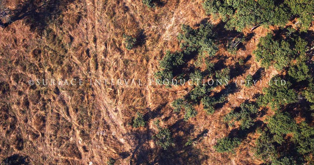 Drone 07.jpg