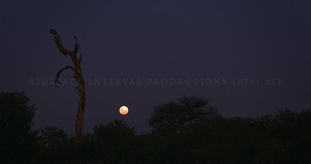 Moon rise 01.jpg