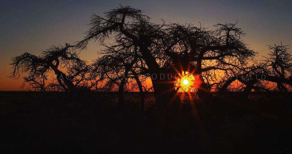Baobab 15.jpg