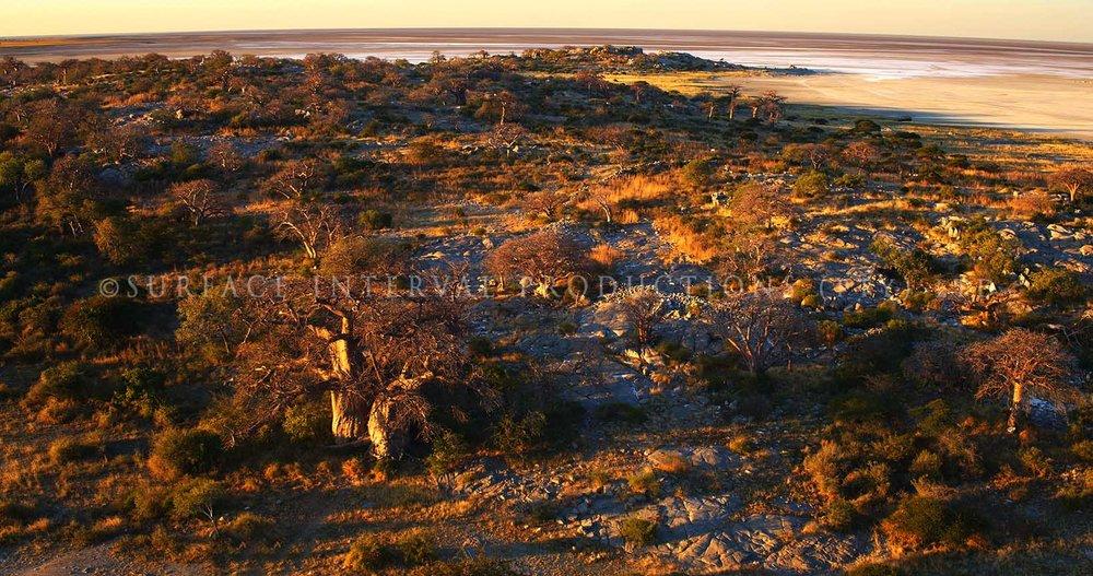 Baobab 17.jpg