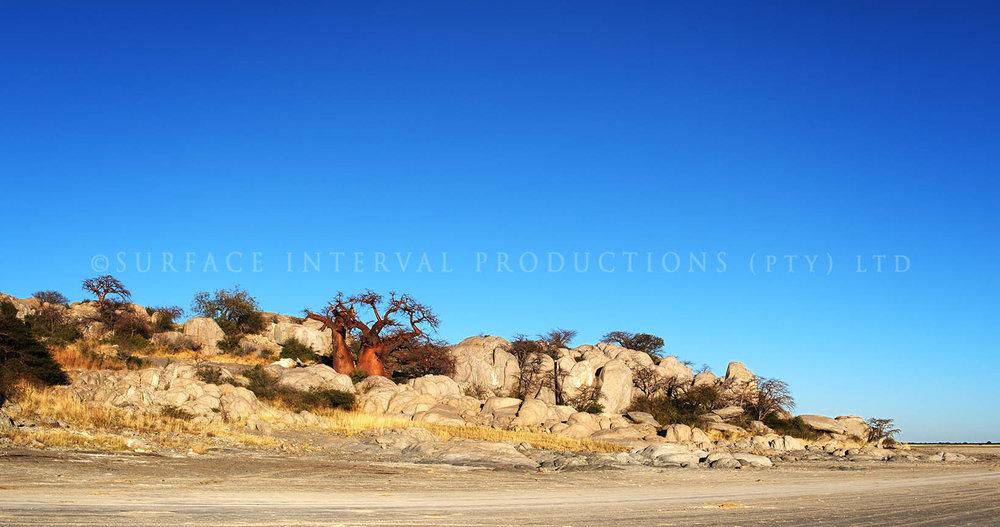 Baobab 19.jpg