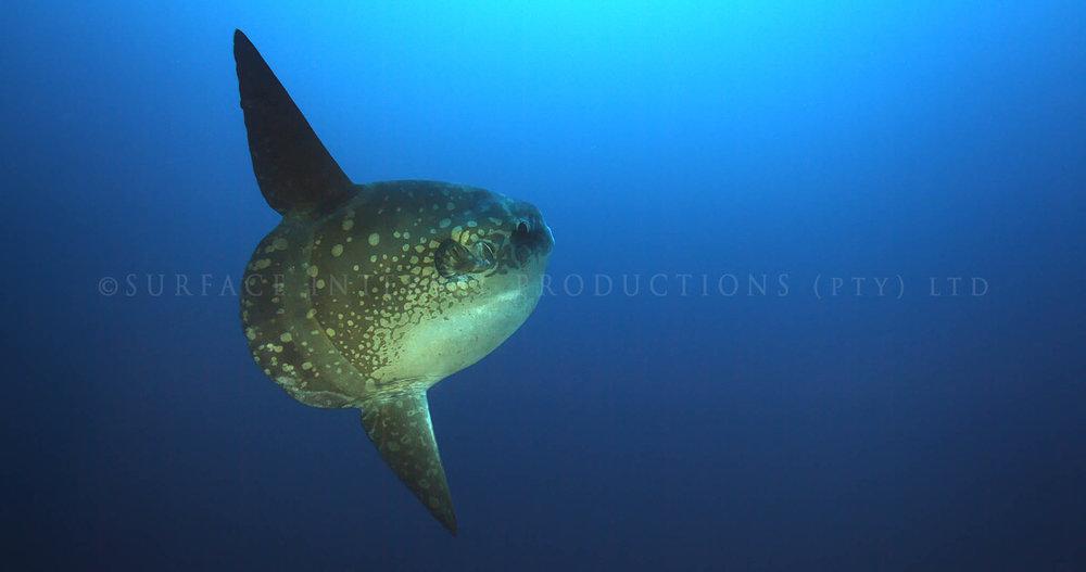 Mola 02.jpg