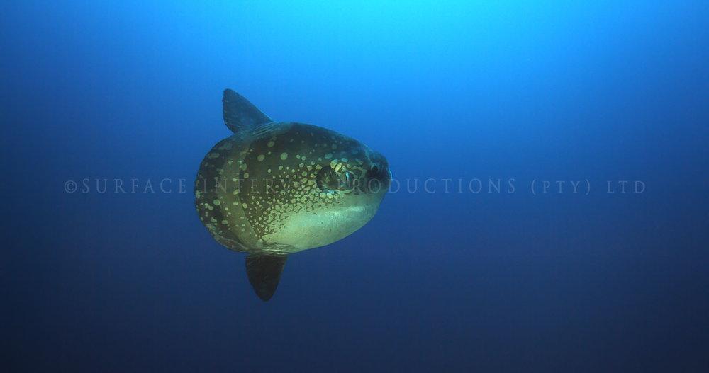 Mola 03.jpg