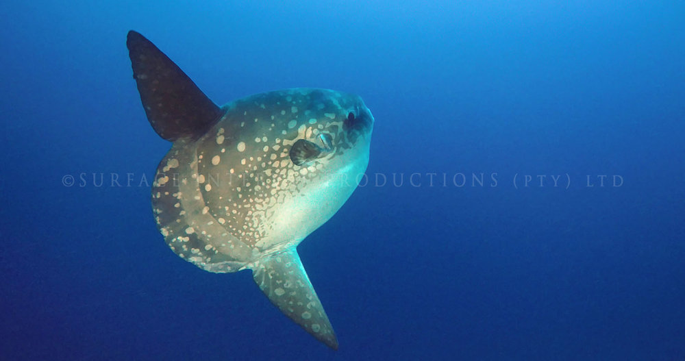 Mola 12.jpg