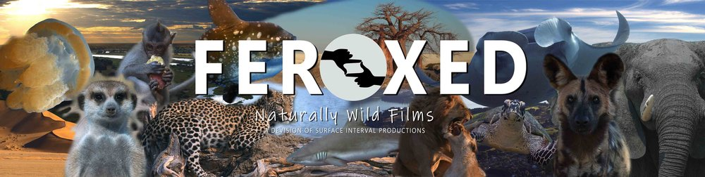 FEROXED - Naturally Wild Films BANNER VERY small.jpg