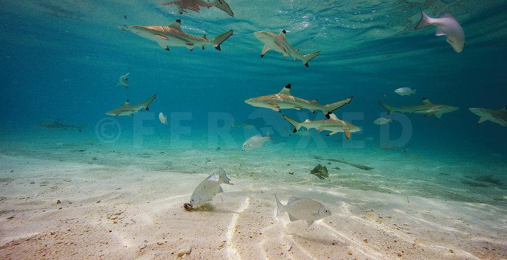 Shark 02.jpg