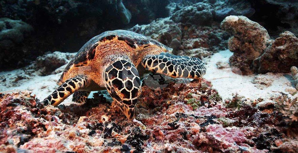 Turtle 02.jpg