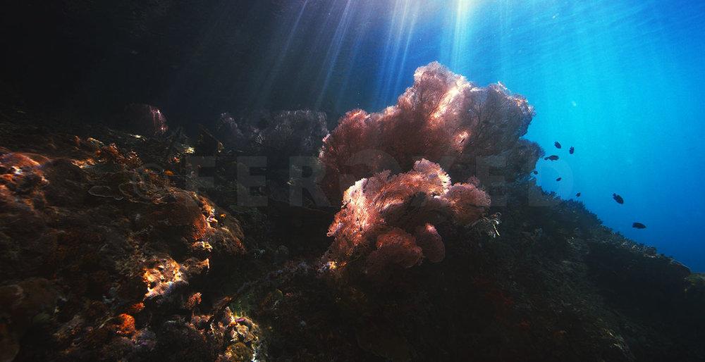 Reef 05.jpg