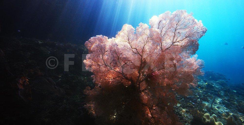 Reef 04.jpg