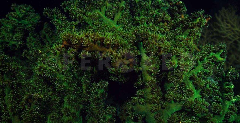 Reef 18a.jpg