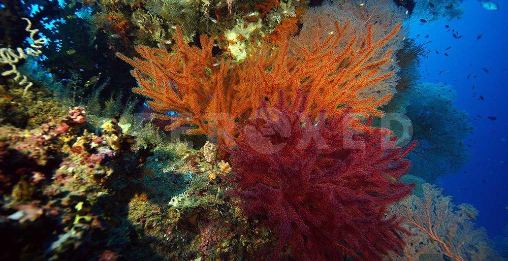 Reef 24.jpg