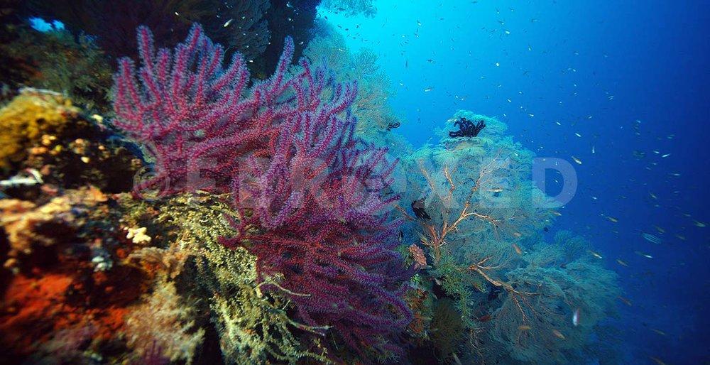 Reef 25.jpg