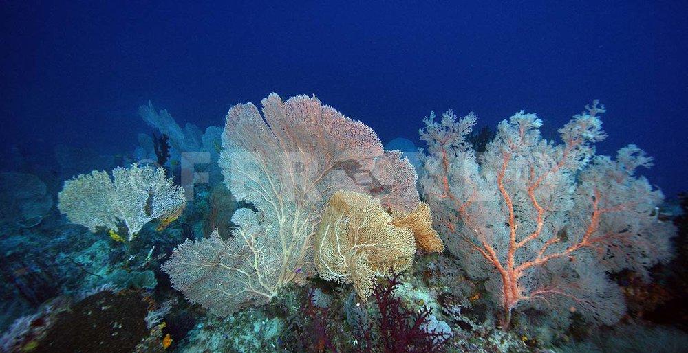 Reef 26.jpg