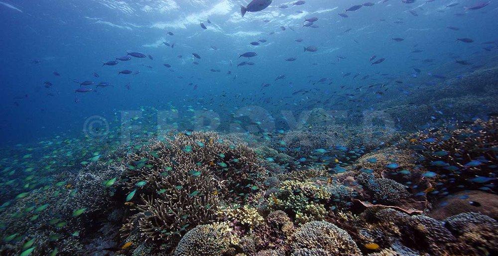 Reef 28.jpg
