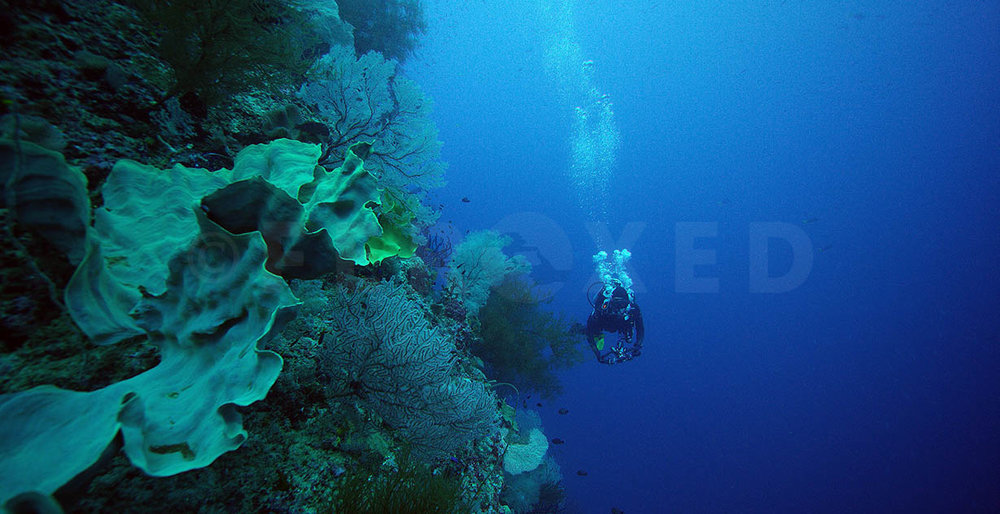 Reef 29.jpg