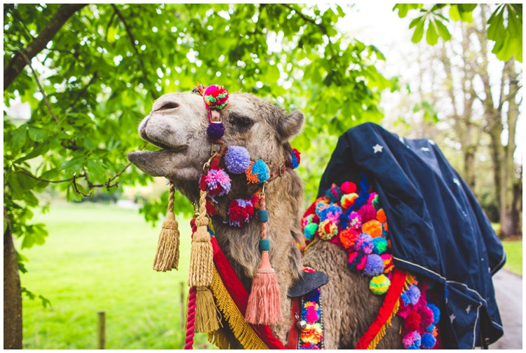Weddings With A Camel