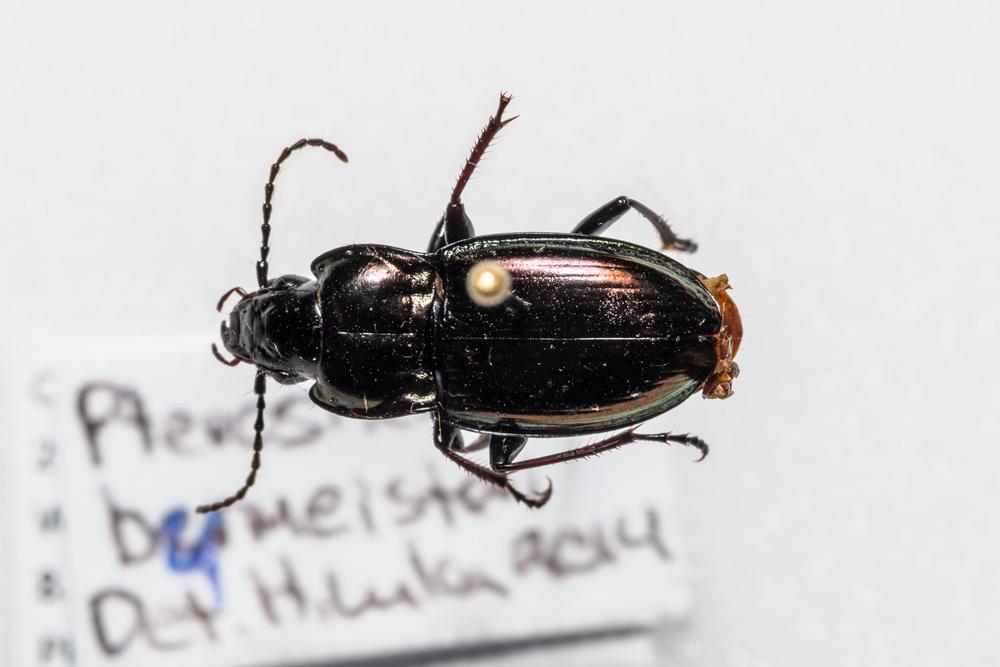 FVDB_BeetlesMacro-4059.jpg