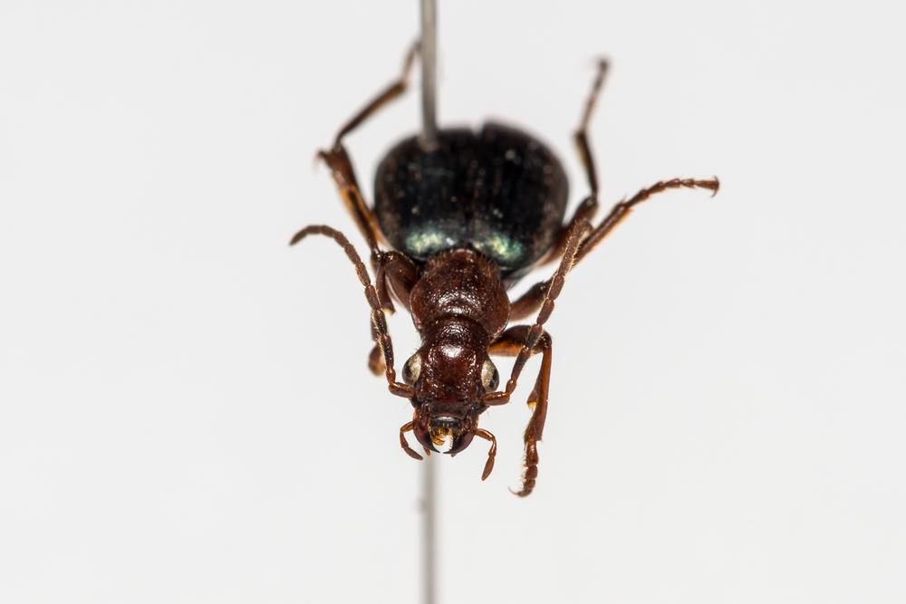 FVDB_BeetlesMacro-4051.jpg