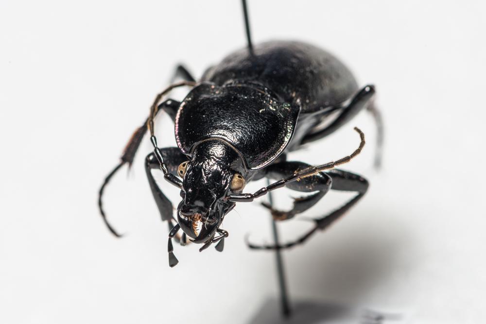 FVDB_BeetlesMacro-4021.jpg