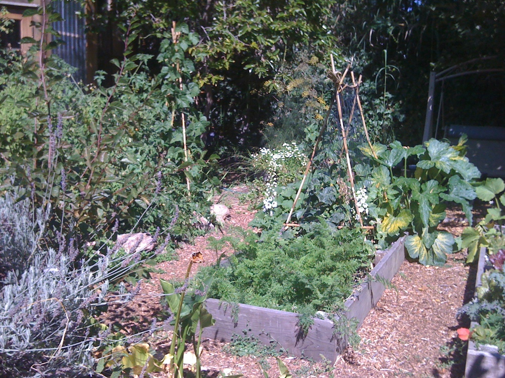 My Garden in Berkeley.  Truly One of my Happiest places.  What places bring you joy when you step into them?
