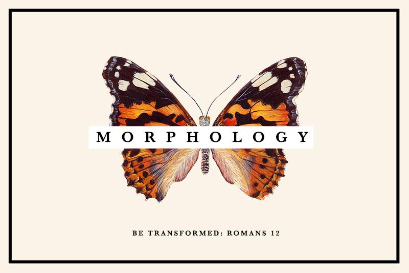 morphology(small).jpg