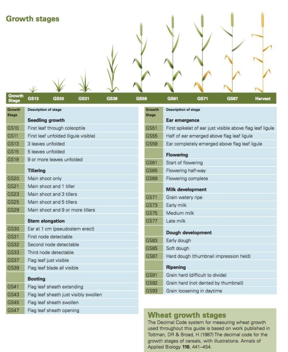 Wheat Development Cycle