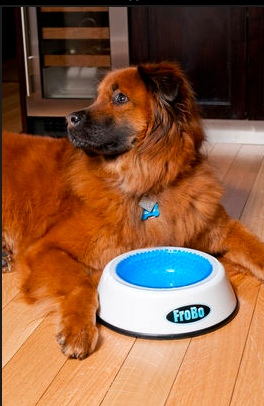 The Frobo, keeps a water dish cold for an extended period