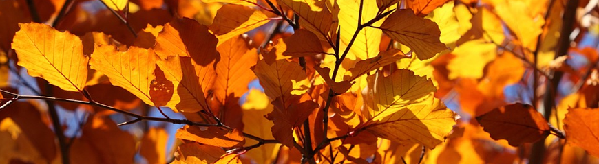 Autumn-banner.png