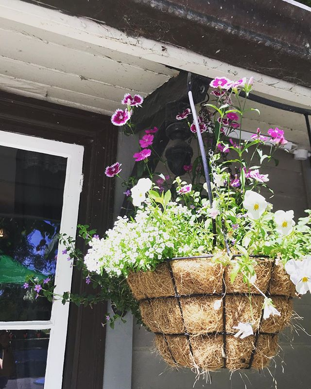 Happy Sunday ☀️ #pegasusarms #christchurch #nz #newzealand #flowers #pub #restaurant #beer #garden