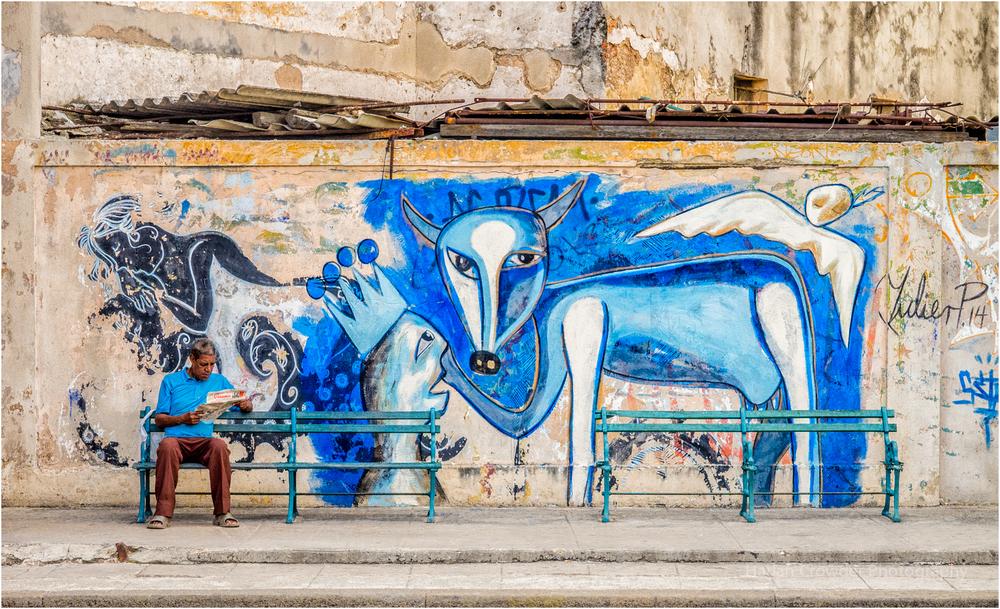 Blue Dog, Havana