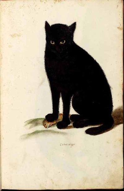 Ulisse Aldrovandi,  Black Cat