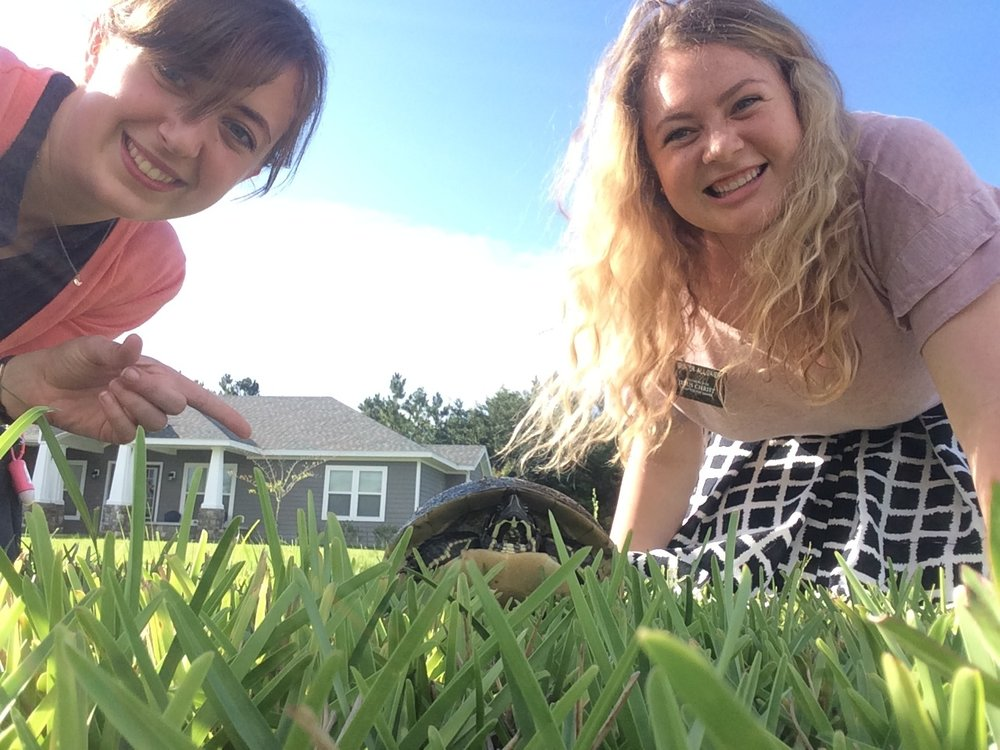 We found a turtle