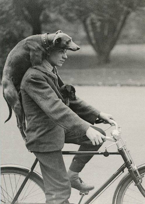 """""""Like dogs, bicycles are social catalysts that attract a superior category of people."""" Chip Brown"""