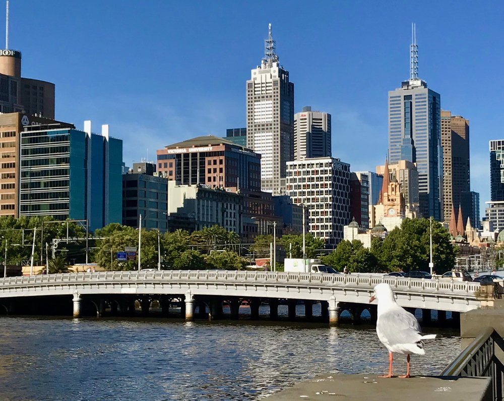 FF_Bird and Melbourne Skyline.jpg